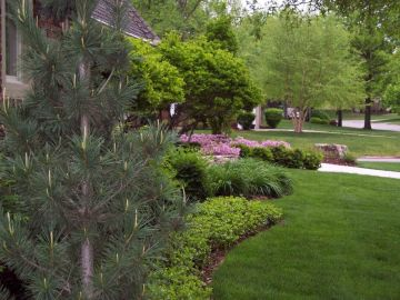 Learn How to Care for Your Trees this Fall