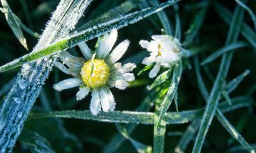 Help Recover Plants Harmed by Frost with These Simple Steps